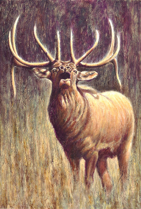 Bugling Bull Elk in warm browns and tilted head painted by artist Travis Knight
