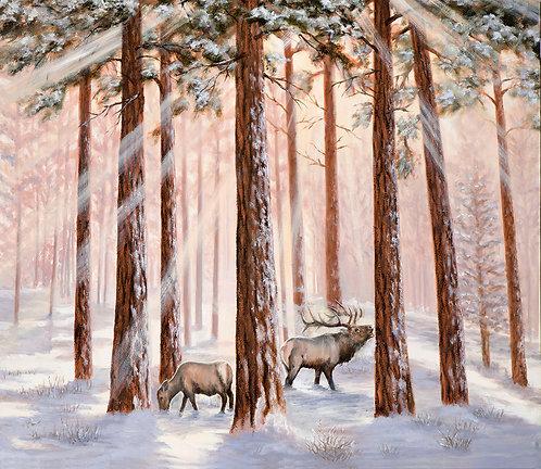 Ponderosas and Elk