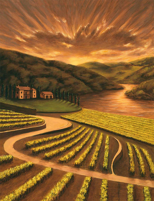 Vineyard by the river