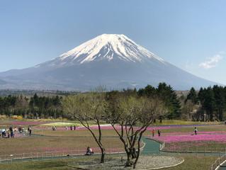 富士もうっすらと。