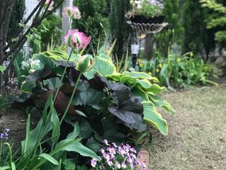 鎌倉 ガーデン