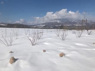 セレニティーガーデン!冬!