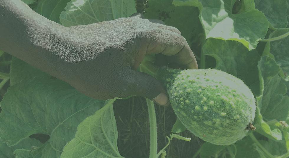 Farming_green.jpg