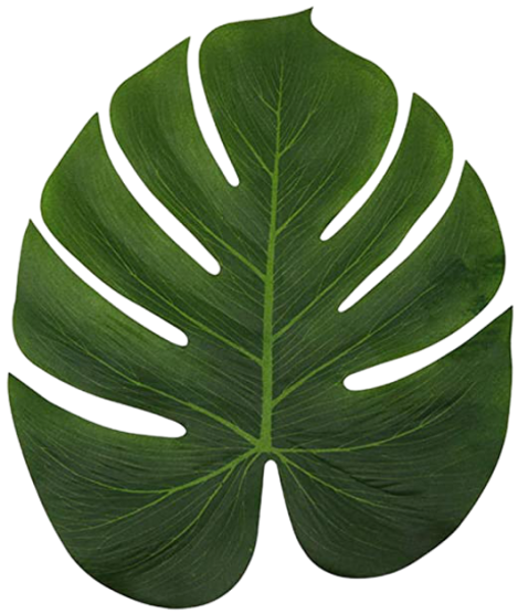 leaf-removebg-preview.png