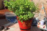 airbrush garden chinese item airbrushed airbrushing