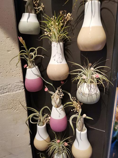 Magnets Frigo- Plantes epiphytes Tillandsia