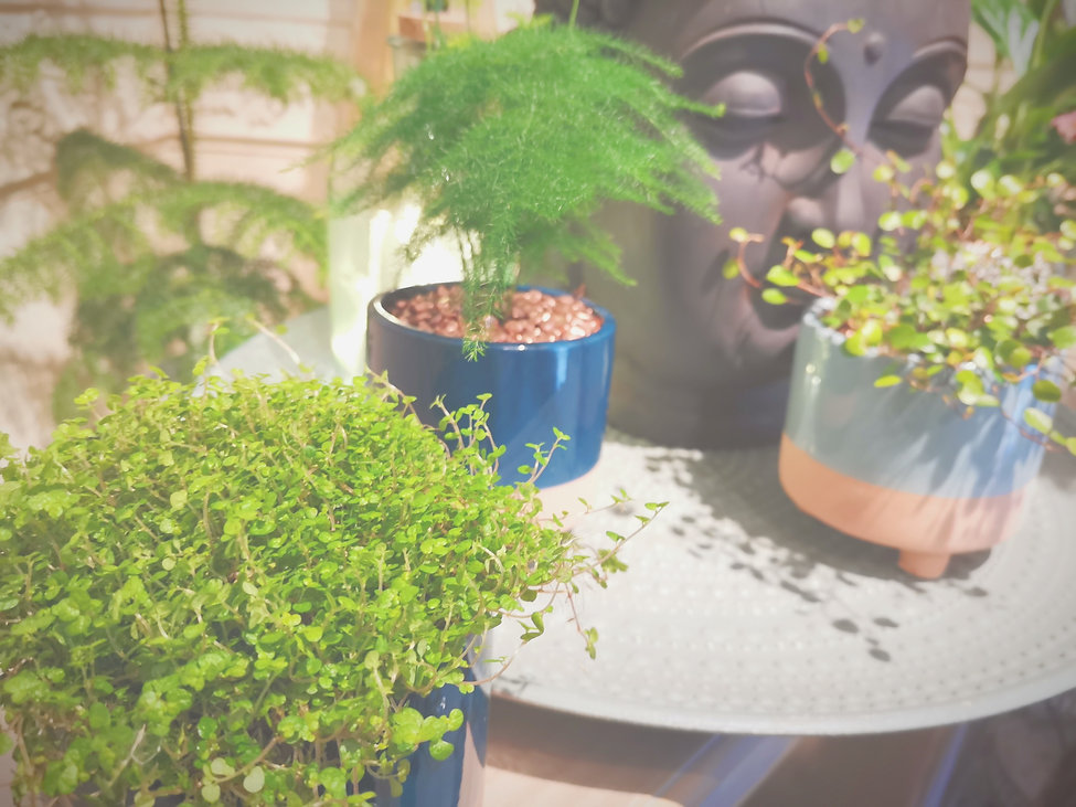 Fleuriste Seconde Nature Montry Plantes Décoration