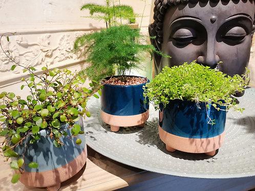 Abonnement mensuel plantes vertes 1 MOIS