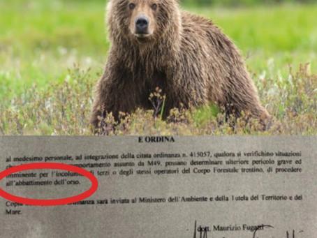 Fugatti Condanna a Morte l'Orso M49