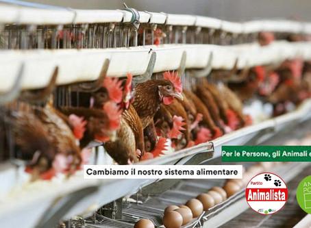 La Petizione dei Partito Animalisti Mondiali supera le 42.000 Firme!... CONTINUA A FIRMARE ...