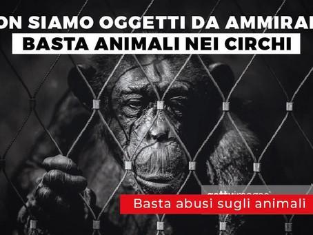 """""""DIVIETO degli Animali Nei Circhi in Italia"""". Il Partito Animalista Domani Presenta la Legge"""