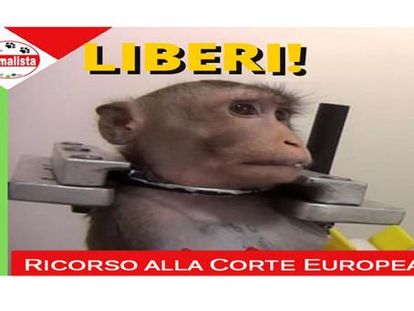 COMUNICATO STAMPA: Vivisezione e Macachi, il Partito Animalista presenta ricorso alla Corte Europea