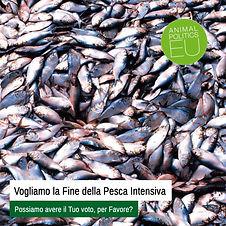 Pesca_Intensiva.jpg