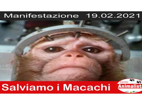 """COMUNICATO STAMPA: Manifestazione """"Salviamo i Macachi"""" il 19.02.'21 fuori il Ministero della Salute"""