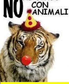 NEWSLETTER: Parte il 26 Febbraio la Proposta di Legge Popolare per Vietare gli Animali nei Circhi
