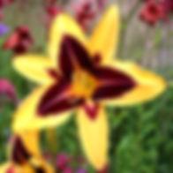 garden-walk-6-sm.jpg