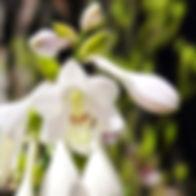 garden-walk-10-sm_edited.jpg