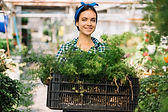 female-gardener-holding-crate-with-plant