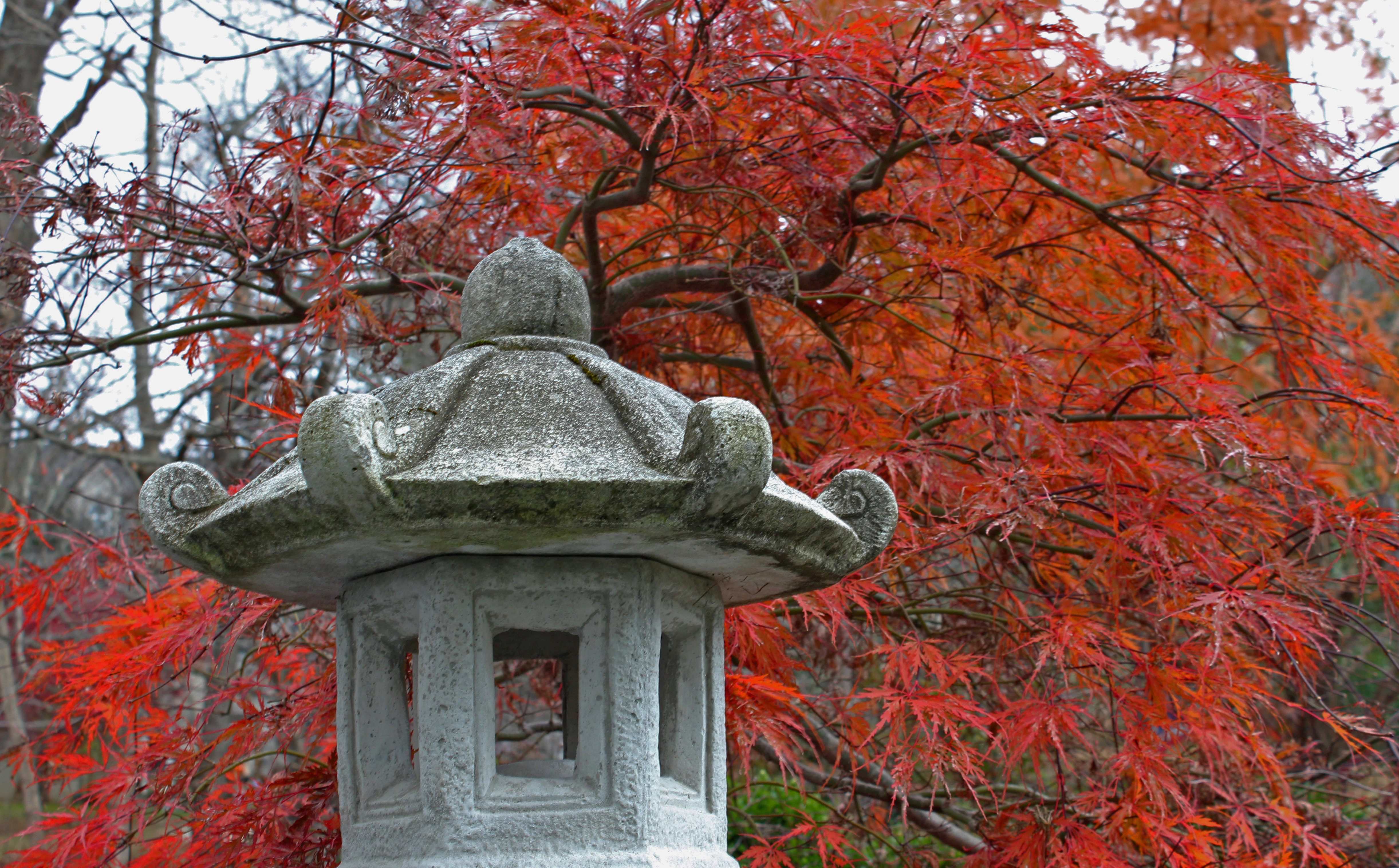 Japanese lantern in my garden.jpg