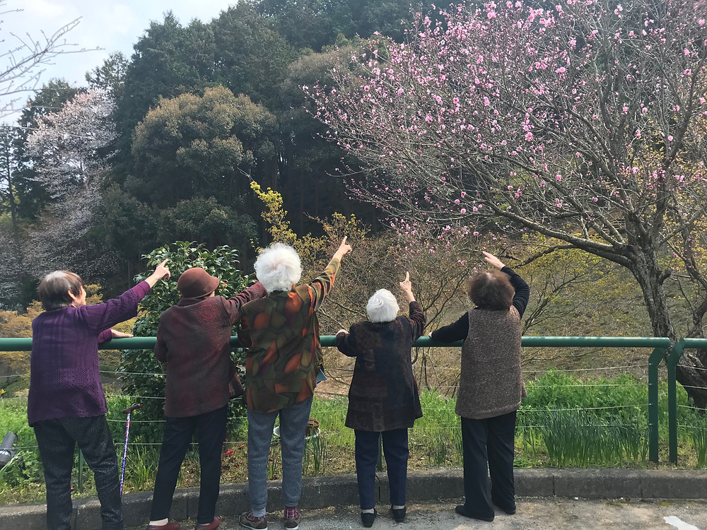 桜をみつけた
