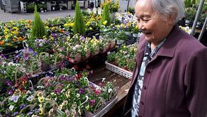 花の苗を買いに🌸