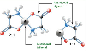 5 Things You Need To Know About Chelate Minerals