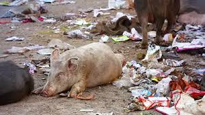 Pig slop.jpg