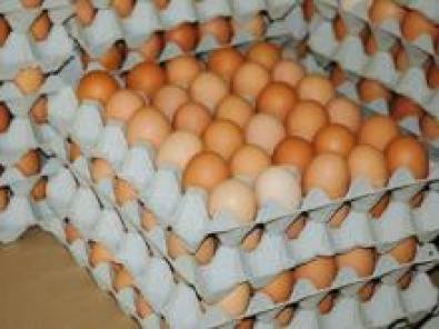 6 Farm Country Eggs