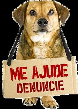 dog_denuncia_ok-4.png