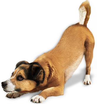 dog_PNG161.png