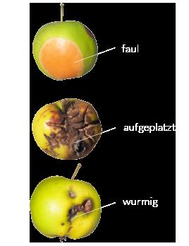 aepfel_schlecht.png