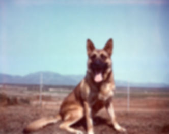 Noble Canine004.jpg
