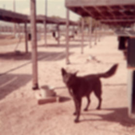 Noble Canine002.jpg