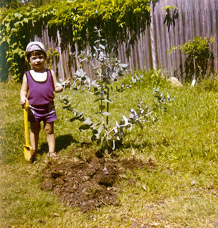 Family Tradition. Each Child Plants His Own Tree. c.1970s