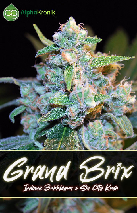 Grand Brix (Indiana Bubblegum x Sin City Kush)