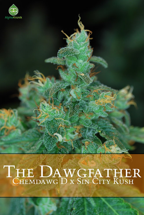 Dawgfather (Dogbud Chem D x Sin City Kush) 10 Seeds