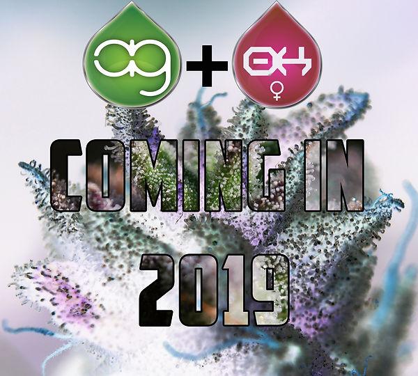 Coming in 2019.jpg