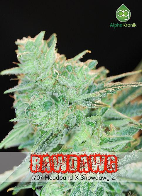 Rawdawg (707 Headband x Snowdawg 2) 10 Seeds
