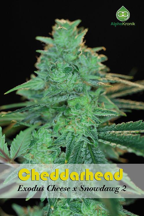 Cheddarhead (Exodus Cheese x Snowdawg 2) 10 Seeds