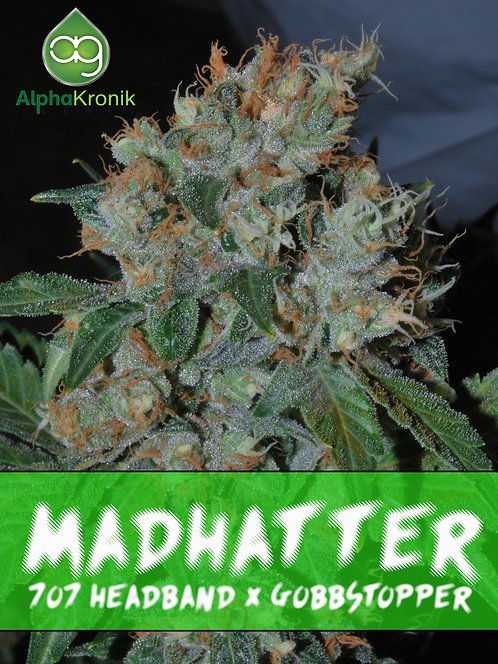 Madhatter (707 Headband x Gobbstopper) 10 Seeds