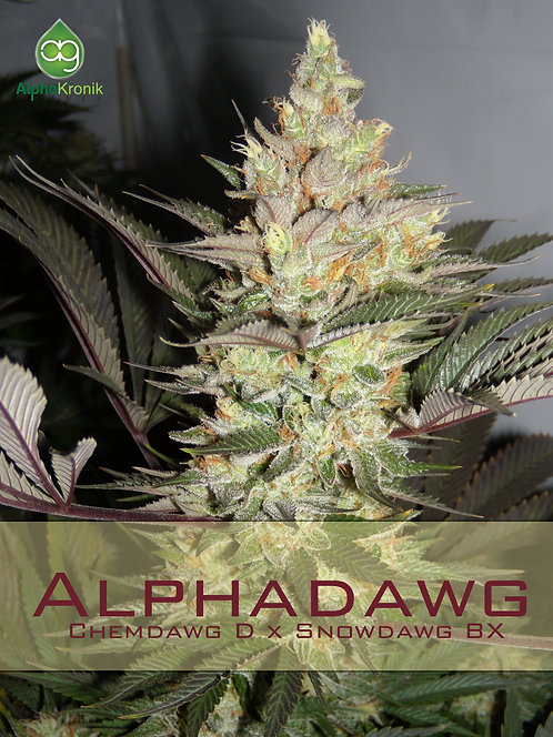 Alphadawg (Dogbud Chem D x Snowdawg BX) 10 Seeds