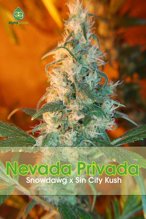 Nevada Privada (Snowdawg x Sin City Kush) 10 Seeds