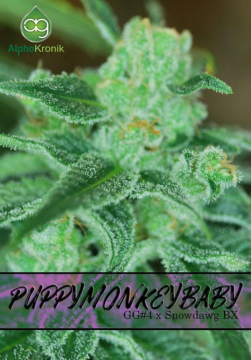 Puppymonkeybaby (GG#4 x Snowdawg BX) 10 Seeds