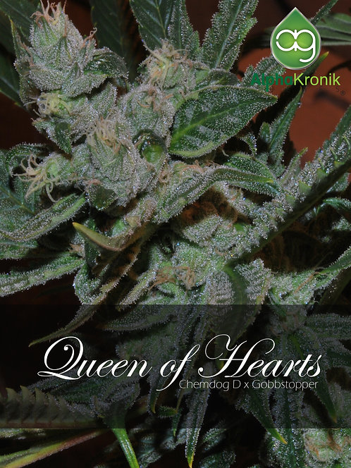 Queen of Hearts (Chemdawg D x Gobbstopper) 10 Seeds