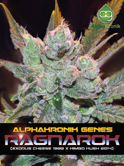 Ragnarok (1988 Exodus Cheese x Kimbo Kush by Exotic Genetix) 10 Seeds