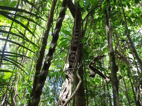 アマゾンの野生動物の行動観察レポート