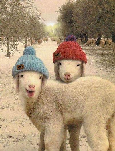 Sheep and Sharpie Hats.jpg