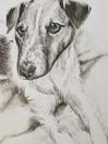 Pencil Portrait - Jack Russell