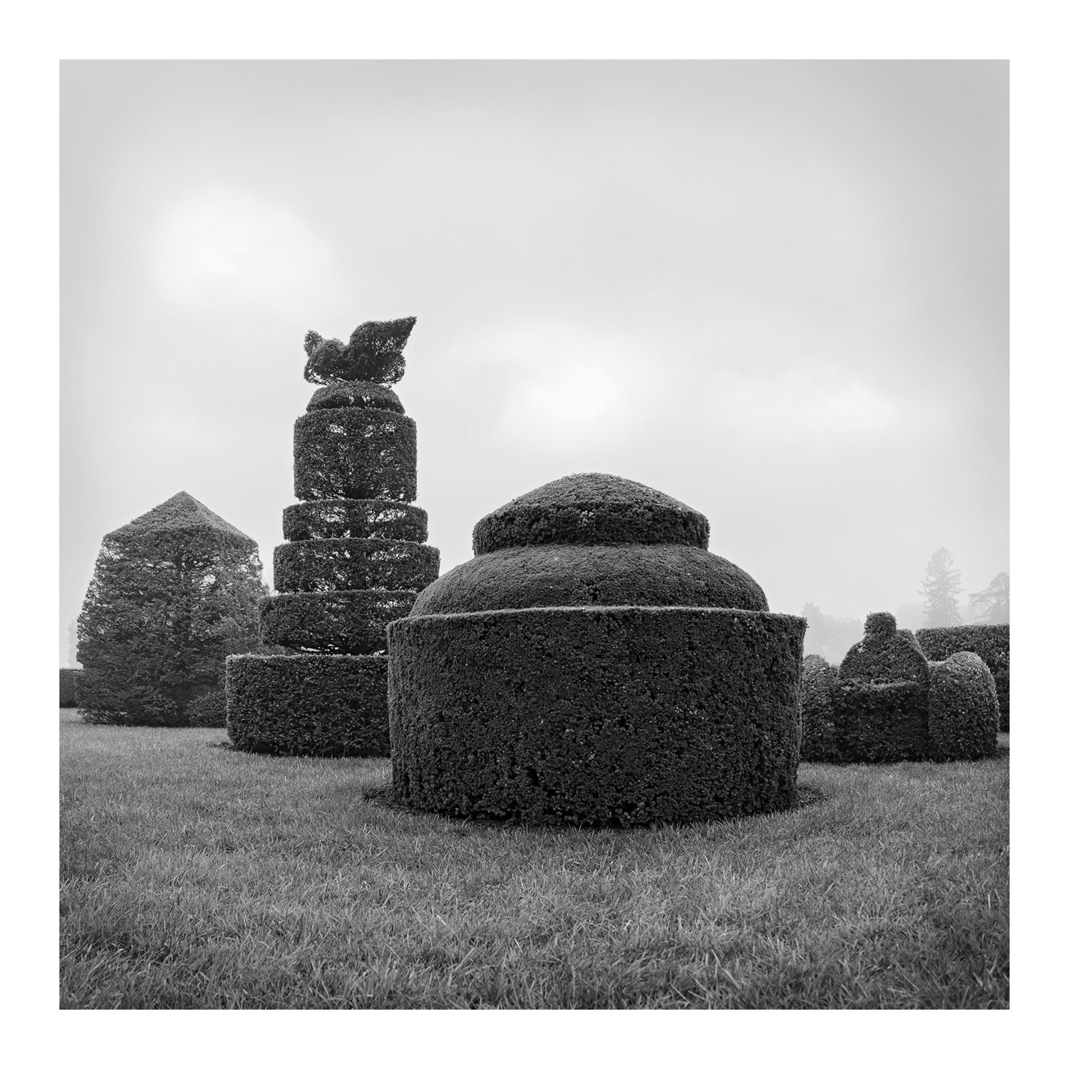 topiary_full_4_bw