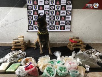 Com ajuda do cão Bart, PM apreende 34 quilos de droga na Brasilândia